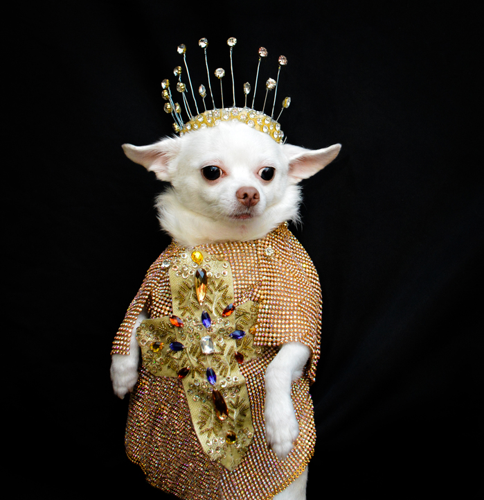 Anthony Rubio Met Gala 2018 Heavenly Bodies Dog Fashion DSC_5484 NEW 300